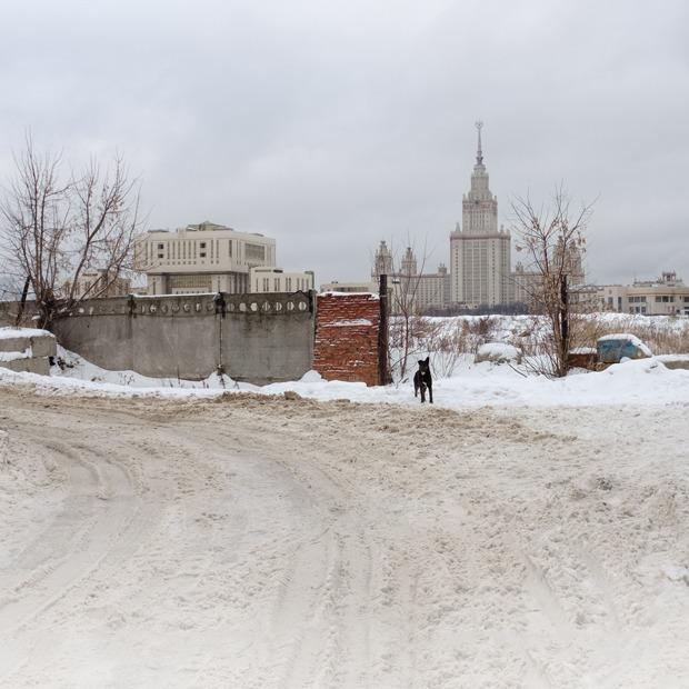 «Здесь легко получить по башке»: Как расчищают место под научную долину МГУ — Истории на The Village