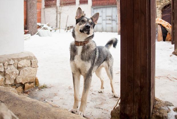 Трое в машине, не считая 12 собак: Как перевезти мини-приют из Донецка в Москву