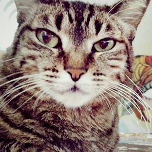 Музейные коты в снимках Instagram — Галереи на The Village