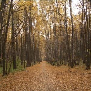 В Битцевском парке повторяется история Химкинского леса — Ситуация на The Village