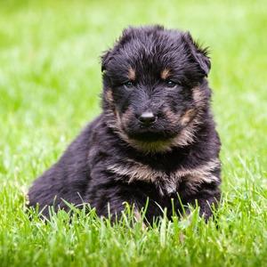 Выставка бездомных собак, театральный марафон в парке и летний «Ламбада-маркет» — События недели на The Village