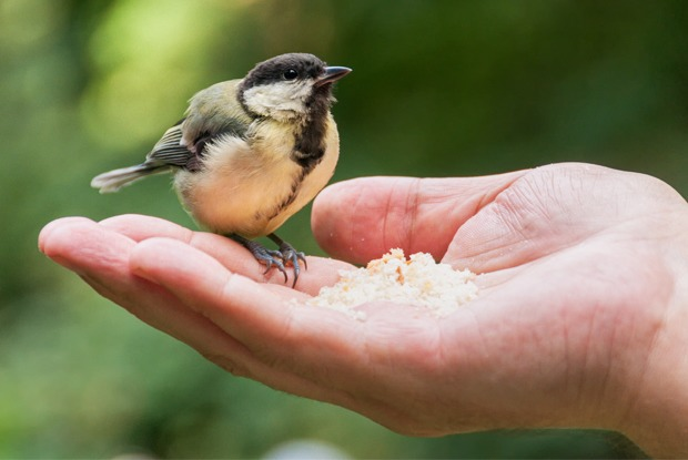Десять фактов про птиц в Петербурге — Город на The Village