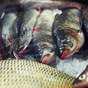Недели местной рыбы: Специальные блюда в 12 московских ресторанах — Рестораны на The Village