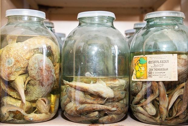 Найти лох-несское чудовище: Как работает Лимнологический институт в Иркутске