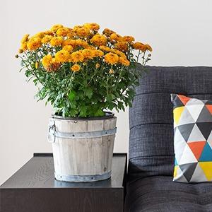 Как преобразить квартиру с помощью домашних растений — Дизайн-хак на The Village