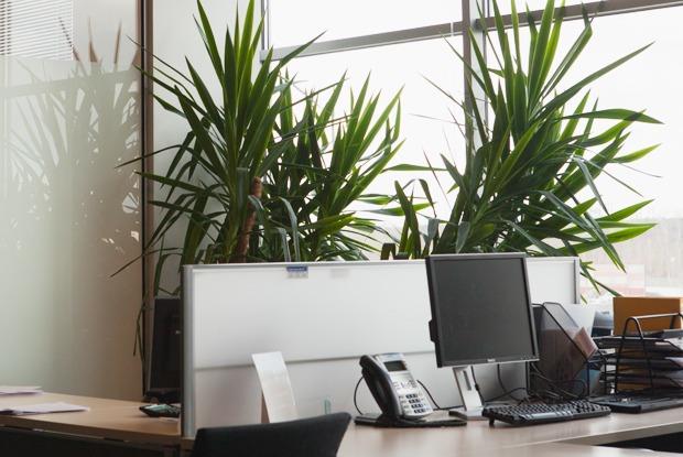 Как работают в Johnson & Johnson — Офис на The Village