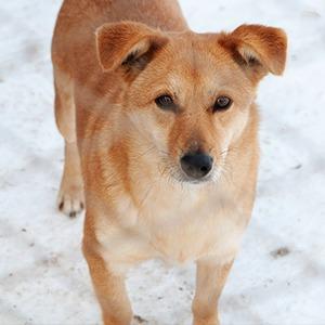Иностранный опыт: Что делать с бездомными собаками — Иностранный опыт на The Village