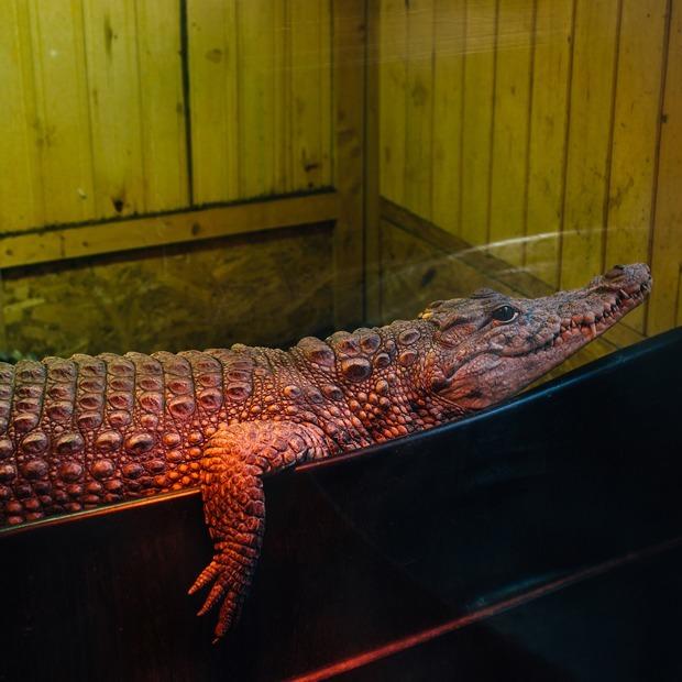 Как петербургский священник открыл при храме зоопарк с крокодилами — Истории на The Village