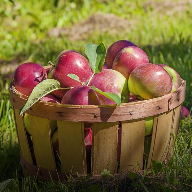 День яблок, отреставрированный «Брат», джазовый фестиваль в Сестрорецке и ещё 13 событий выходных — Выходные в городе на The Village