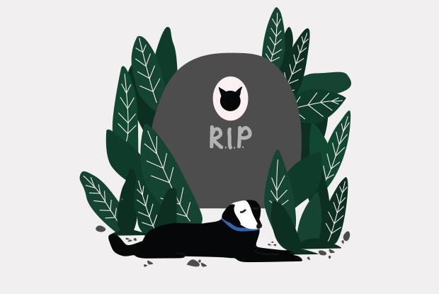 Сколько стоит похоронить домашнее животное? — Простые числа на The Village