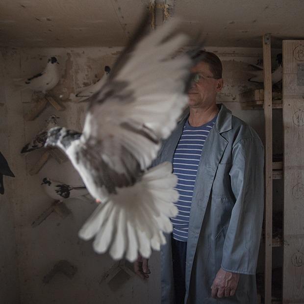 Последние романтики: Кто держит голубятни в Екатеринбурге — Люди в городе на The Village