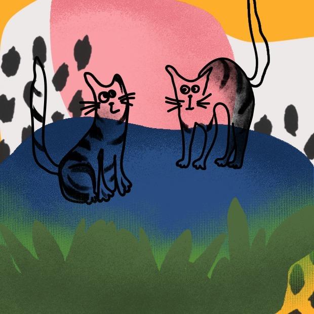 Сколько можно заработать на котах по вызову — Простые числа на The Village