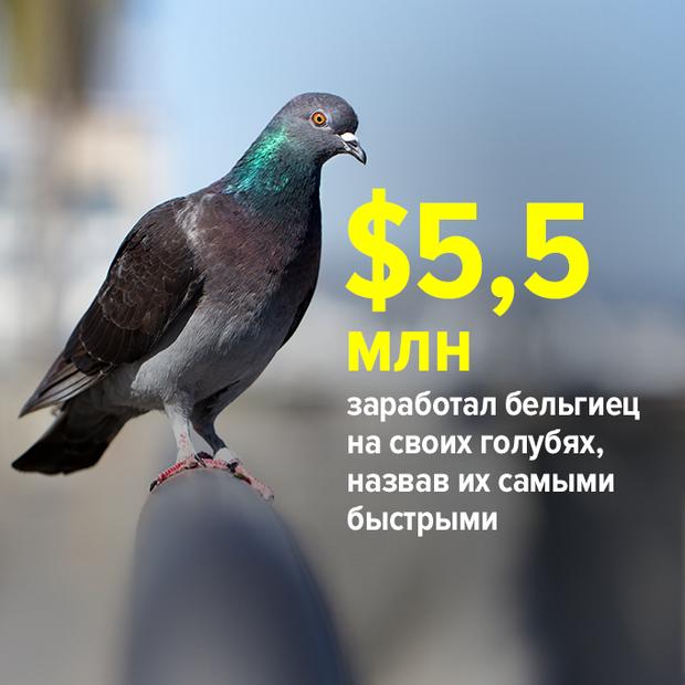 ...заработал бельгиец на своих голубях, назвав их самыми быстрыми