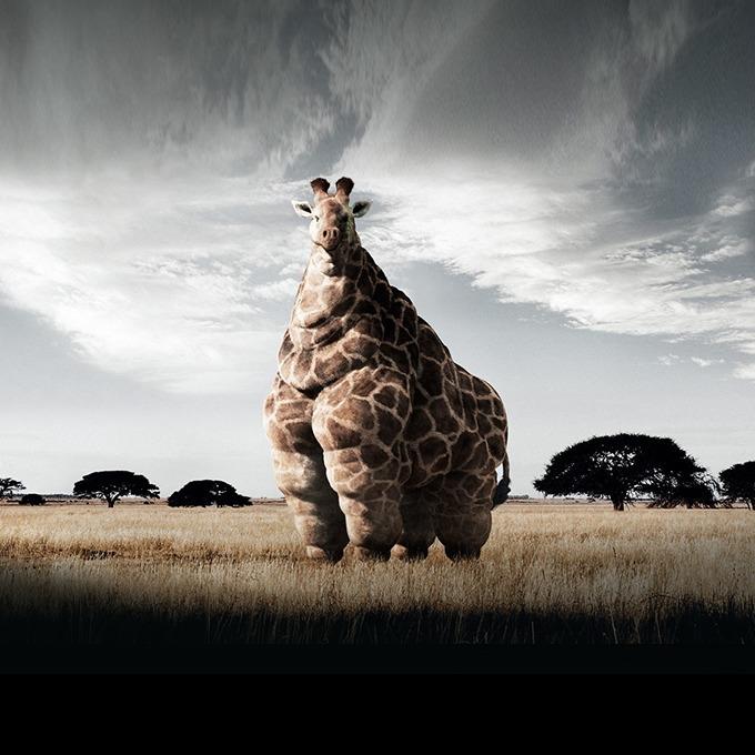 Удержать вес: Почему полнеющие сотрудники — тревожный сигнал для компании — Менеджмент на The Village