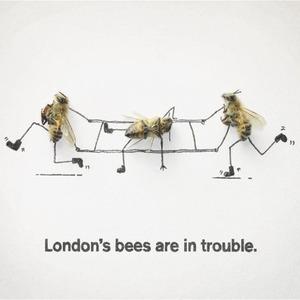 Как у них: «Городские пчёлы» в Лондоне — Как у них на The Village