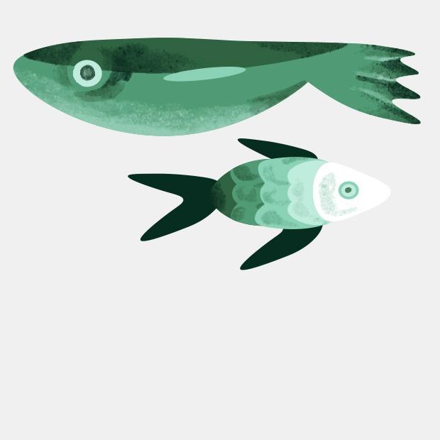 Как выбирать рыбу? — Съесть вопрос на The Village