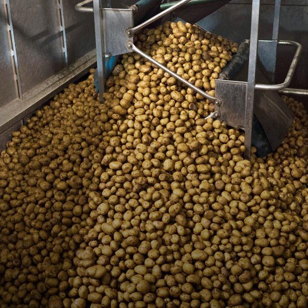 Как делают чипсы — Производственный процесс на The Village