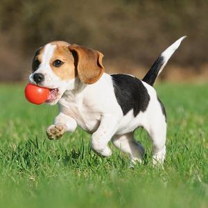 Пёс с ними: 6 приложений для владельцев домашних животных — Сервис на The Village