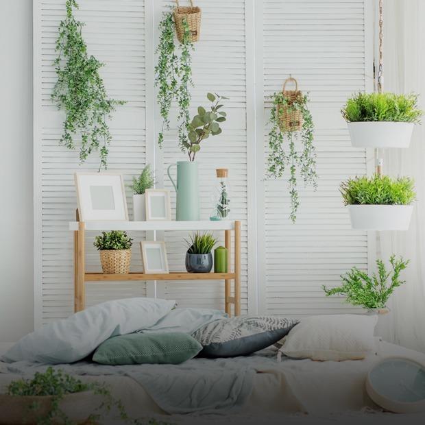 Где покупать домашние растения и как их выбирать? — Вещи для дома на The Village