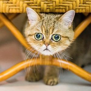 «Ресторанный день», бои учёных, ночь «Друзей», выставка котов и ещё 17 событий — Выходные в городе на The Village