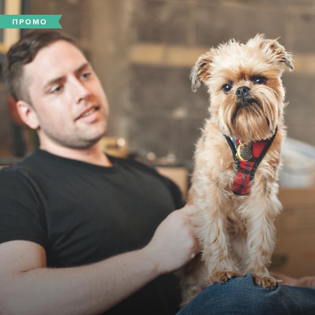 Как сделать свой офис dog-friendly — Спецпроекты на The Village