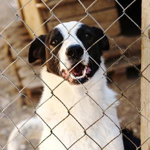 Как помочь бездомным собакам найти дом — Личный опыт на The Village