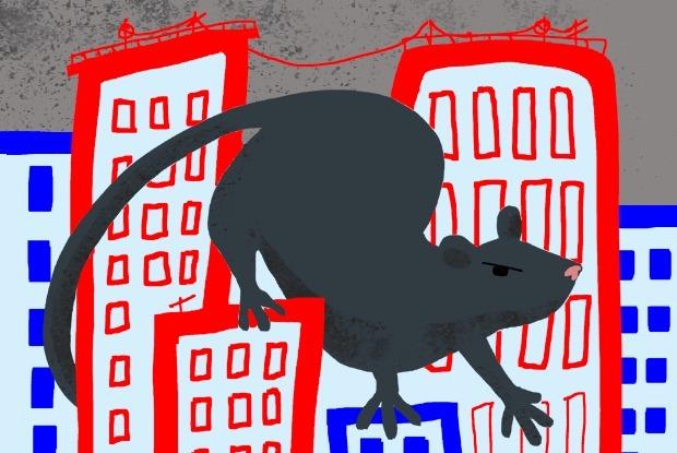 Есть ли в Москве нашествие крыс? — Есть вопрос на The Village