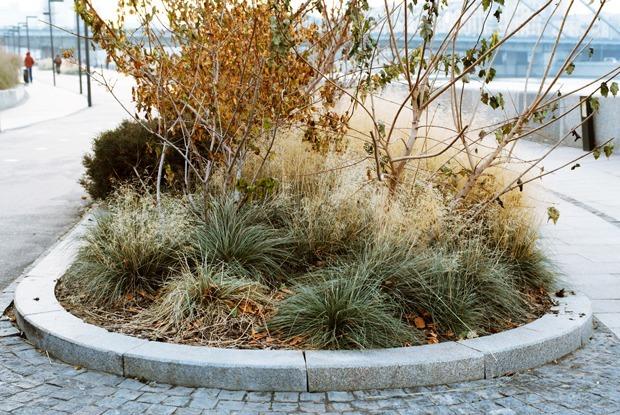 Почему с Крымской набережной пропадают растения