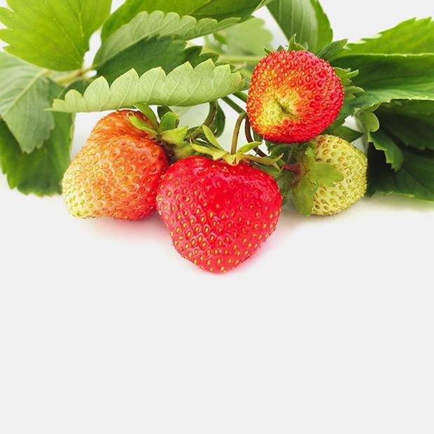 Как использовать неспелые фрукты? — Как надо на The Village