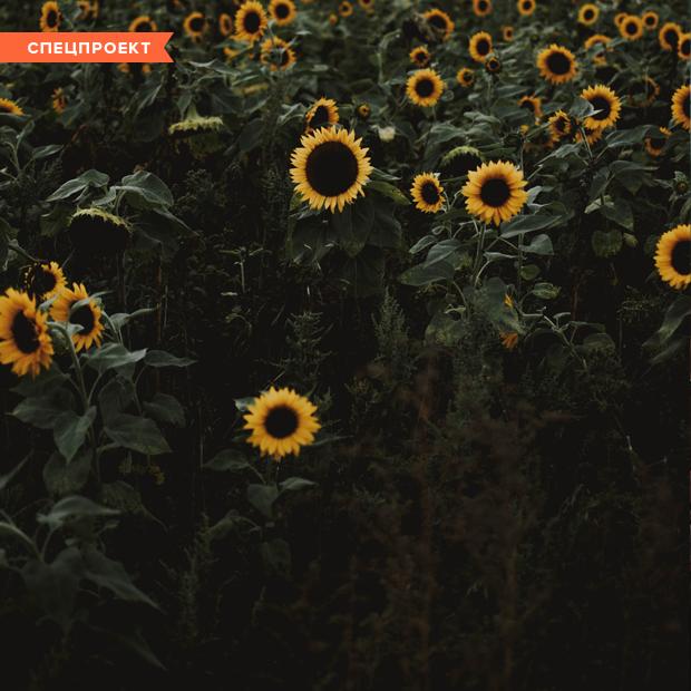 «У меня аллергия на полынь, поэтому подсолнечное масло может меня убить» — Личный опыт на The Village