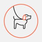 В метро разрешат проходить с собаками-поводырями
