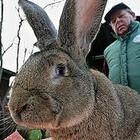 Москвичи массово скупают живых кроликов