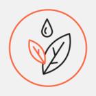 Сочинское тюльпанное дерево вошло в тройку победителей всероссийского конкурса