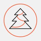 Устанавливать новогодние елки за счет спонсоров