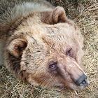 Люди в городе: Волонтёры в приюте для диких животных