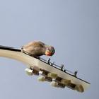 Бурсье-Мужено: как заставить птиц играть на гитаре?