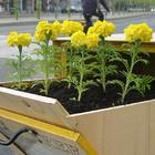 В Петербурге пройдут лекции о том, как озеленить свой двор