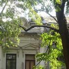 Около Пушкинского музея вырубают старинный парк