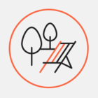 В Иркутске изготовят скамейку в виде нерпы