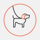 В Академическом районе появились диспенсеры с пакетами для уборки за собакой