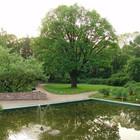 В Ботаническом саду пройдёт бесшумный open-air