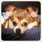 Осенние собаки в снимках Instagram