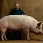 Чудо свинина или как поесть со вкусом!