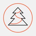 В Петербурге установили первую новогоднюю елку. За два месяца до праздника