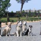 В Музей городской скульптуры до мая можно приходить с собаками