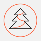Акция по сбору и переработке новогодних елей сменила формат и название