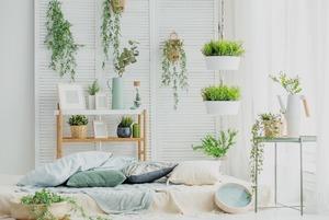 Где покупать домашние растения и как их выбирать?