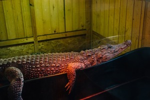 Как петербургский священник открыл при храме зоопарк с крокодилами