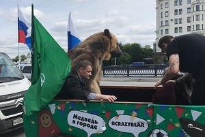 Можно ли возить медведя в кабриолете по Москве