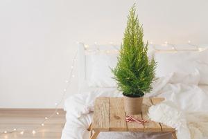Как миллениалы украшают свои жилища к Новому году